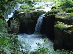 霧島裂罅水、飼育環境(宮崎にて)
